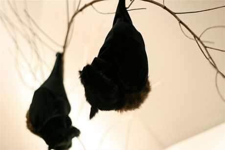 stuffed fruit bat sculptures